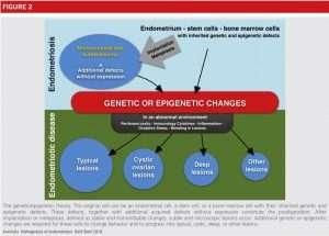 The genetic-epigenetic theory